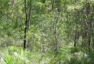 Acton Park WA Revegetation 5