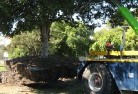 Acton Park WA Tree felling services 4